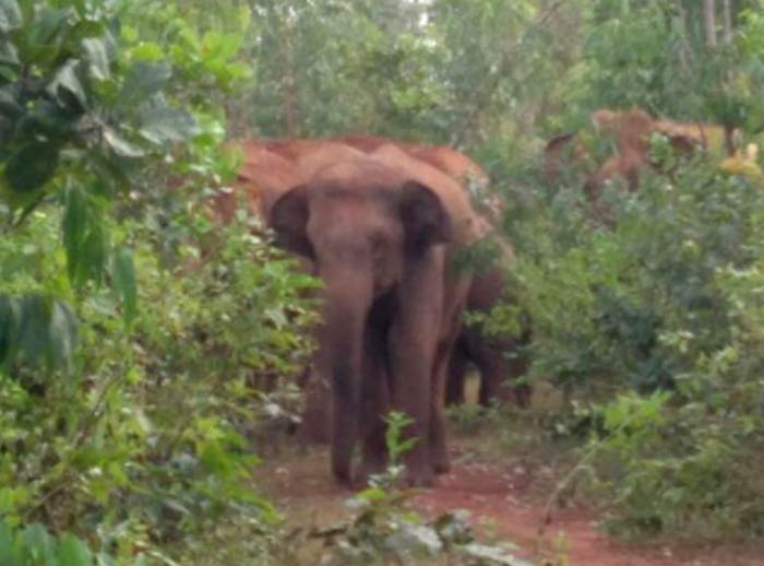 This Forest Is Also A habitat Of Elephants