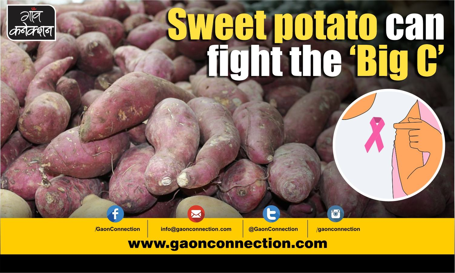 Have sweet potatoes, reduce the risk of breast cancer by 24%