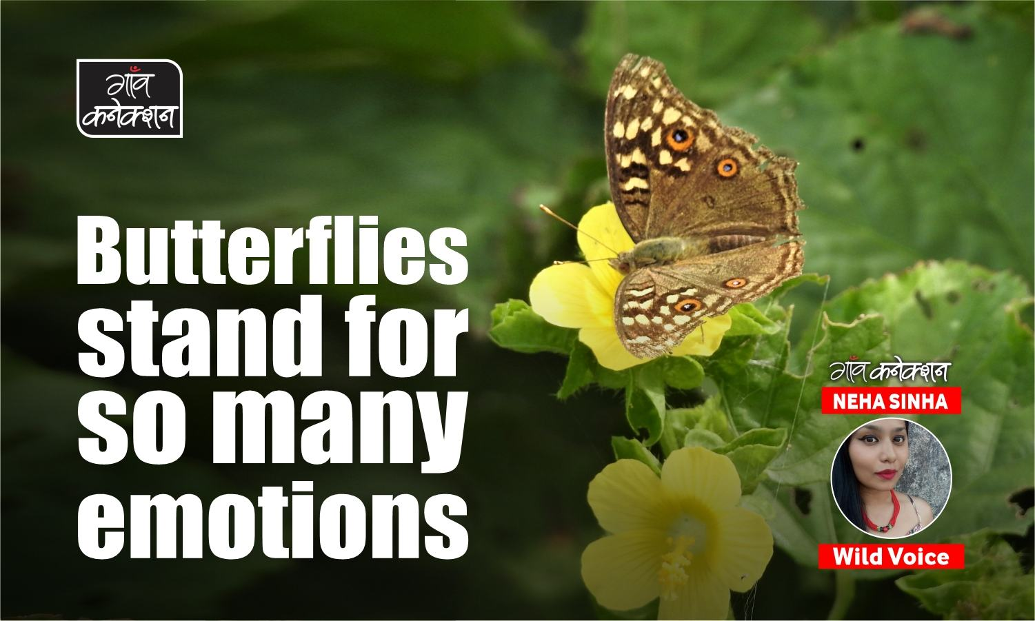 As parts of the world become hotter and drier, one wonders where the butterflies will go