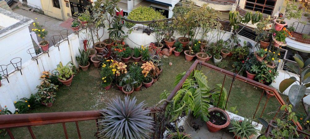 नारियल के रेशों से उगा रहे सब्जी