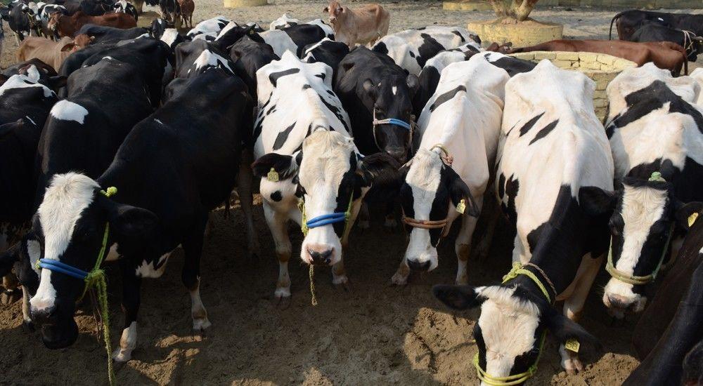 पशुधन आरोग्य योजना से सुधरेगी पशुओं की सेहत
