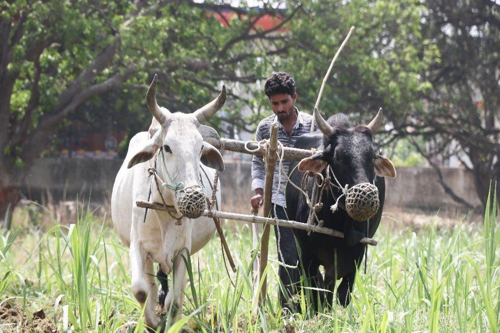 'खेतों में जुताई न करें किसान, मिलेगी अच्छी पैदावार'