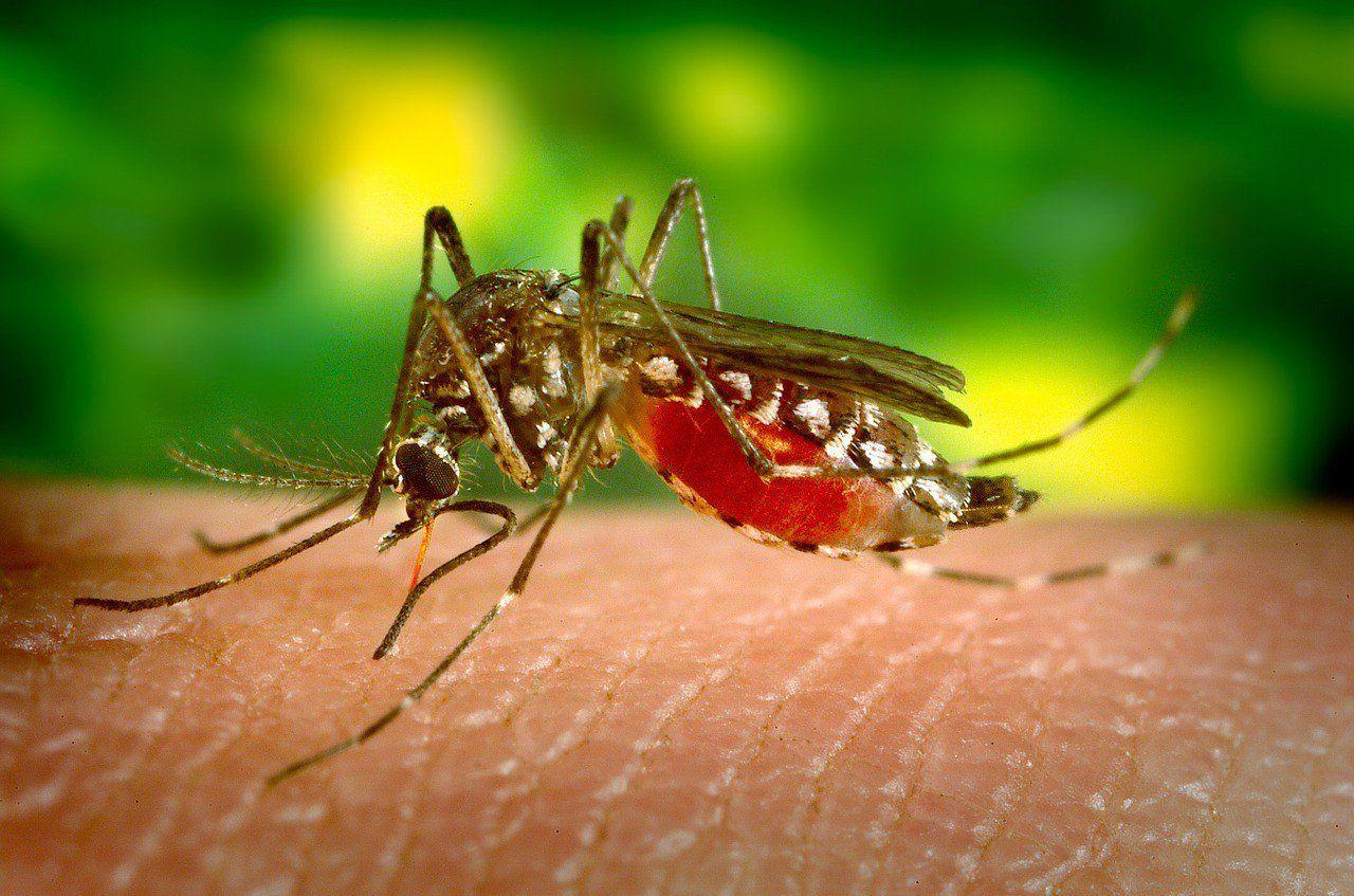 ...डेंगू पर काबू नहीं पाया तो भयावह होंगे हालात